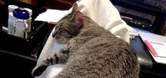 """Feline Paralysis: """"I Can't Help Fix Dinner, I've a Cat on My Lap!"""""""