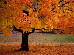 An Autumn Beauty
