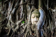 This HD wallpaper is about Buddha Statue Overgrown by Tree Roots, buddhism, religion, asia, Original wallpaper dimensions is file size is Luang Prabang, Angkor, Buddhism Religion, Macbook Air Wallpaper, Tree Roots, Bagan, Original Wallpaper, Background S, Wallpaper Backgrounds