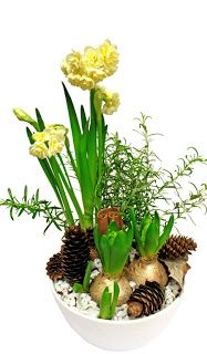 http://holmsundsblommor.blogspot.se/2009/12/doftande-julgrupp-1.html Julgrupp tazett, hyacint, rosmarin. Väldoftande