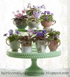 I styled this shot of my mini violets for a garden magazine