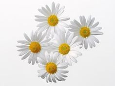 Pin By Romany On Rpg Sunflower Png Clip Art Flowers