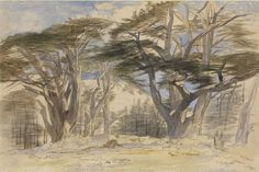 Edward Lear: The Cedars of Lebanon | Pictures | Lowell Libson