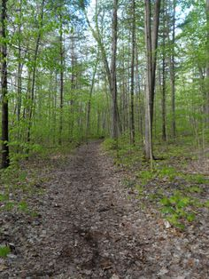 Trail leading into Frontenac Provincial Park from the Kingsford Dam parking area.
