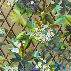 Canopy Wallpaper Christian Lacroix