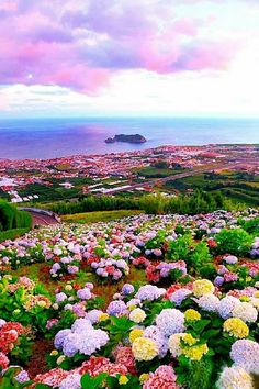 Vila Franca do Campo at sunset, hydrangeas São Miguel, Azores, Portugal. Beautiful World, Beautiful Gardens, Beautiful Flowers, Beautiful Places, Beautiful Scenery, Beautiful Landscapes, Wonders Of The World, Amazing Nature, Nature Photography