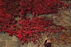 A man photographs foliage in autumn color in central London, Britain.