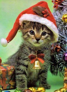 クリスマスの猫画像 05|ねこLatte+