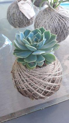 KOKEDAMA 🍃🌿🌱 New little hobby that I'm slowly getting better at. Succulent Planter Diy, Succulent Gardening, Planting Succulents, Planting Flowers, House Plants Decor, Patio Plants, Ikebana, Flower Shop Decor, Plants In Bottles