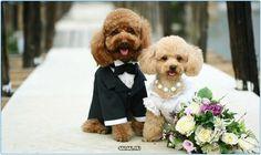 Собаки на свадьбе  #свадьба #собаки #собака #россия #москва #серпухов #тула #спб #хабаровск #самара #омск #красиво #животные #добро #animals #pet #pets #dogs #dog #dogy #wedding #moskow #russia #animal