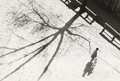 Mieczysław Choynowski, Drzewo, 1937 #chojnowski #drzewo #tree #photography #blackandwhite #choynowski