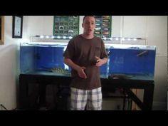 How to build an acrylic aquarium - a little amateur but very informative