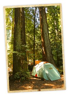 Most people zip right on by western Marin's Samuel P. Taylor State Park en route to Point Reyes. And that's great news for the rest of us! This lush and tranquil open space is a confluence of redwoods, grasslands, and clear-running creeks. It's also home to Camp Taylor—61