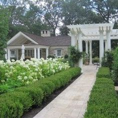 Boxwood and Hydrangea work well as companion plants.