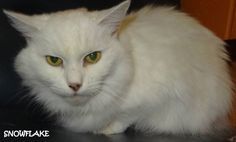 ADOPTED! AVAILABLE NOW! STRAY  Tag# 4148 Name is Snowflake  White Female-unsure of spay  Possibly deaf   https://www.facebook.com/267166810020812/photos/a.717171005020388.1073742072.267166810020812/719255138145308/?type=3&theater