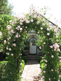 Beautiful Rose Arbor ~ Cecile Bruener Rose www.lindafloyd.com
