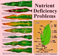 101 Gardening: What Does the Leaf Says About Nutrient Deficiency Problem