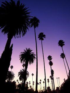 Palm tree silhouettes always make for gorgeous photos!