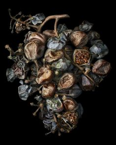 Grappe Eternamé pour Marie Claire 2 © Peter Lippmann