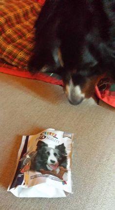 Aurora <3 #Cliffi #snacks per #cani. Cliffi #dog #biscuits
