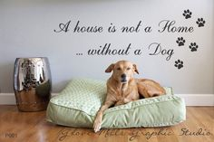 A House Is Not a Home Without a dog Wall decal - Pet wall quote decal. $28.00, via Etsy.
