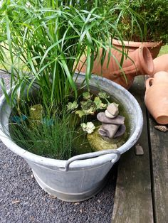 Container patio pond in a galvanized bucket.