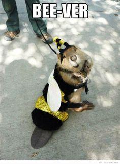 Bee -Ver not Bieber !!! #bee #beever #funny