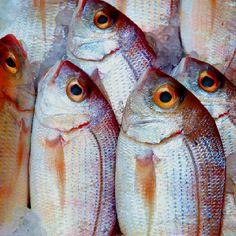 Marché aux poissons - Crête