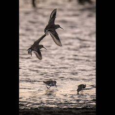 【denden_fish】さんのInstagramをピンしています。 《#海 #海辺 #鳥 #夕方 #写真撮ってる人と繋がりたい #写真好きな人と繋がりたい #ファインダー越しの私の世界 #ニコン #ニコン倶楽部 #キタムラ写真投稿 #dusk #evening #twilight #twilightscape #nikon #nikonphoto #IAmNikon #nikonphotography #nature #naturephoto #naturephotography #sea #seaphotography #seaside #bird #birds #ig_bird #instabird #birdstagram #birdy》