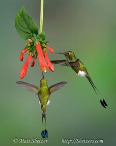 hummingbird photo tour