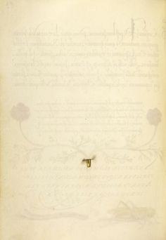 [folio 26v] Joris Hoefnagel (illuminator) [Flemish / Hungarian, 1542 - 1600], Trompe l'Oeil Stem of a Pheasant's Eye, Flemish and Hungarian, 1561 - 1562; illumination added 1591 - 1596, Watercolors, gold and silver paint, and ink on parchment, Leaf: 16.6 x 12.4 cm (6 9/16 x 4 7/8 in.), 86.MV.527.26v.