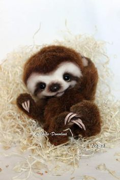 Baby Sloth By Ljudmila Donodina – I am very glad to introduce to you Baby Sloth…. Baby Sloth By Ljudmila Donodina – I am very glad to introduce to you Baby Sloth. Baby Animals Pictures, Cute Animal Pictures, Animals And Pets, Nature Animals, Cute Puppies, Cute Dogs, Cute Babies, Tiny Puppies, Lab Puppies