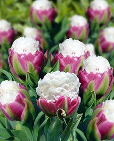Ice cream tulips. I want!!!!