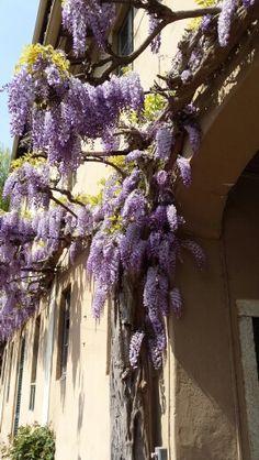 Villa Valera, Arese ( Milano ), 3 day ago...lovely...