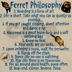 Funny Ferrets   Funny Ferret tote bag - Ferret Philosophy by speeder