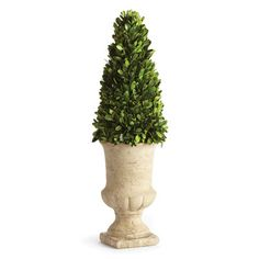 Napa Home & Garden Preserved Greens Topiary in Urn & Reviews | Wayfair