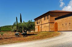 Weingut Monteverro: Ein Mann, ein Weg - und viele Weine