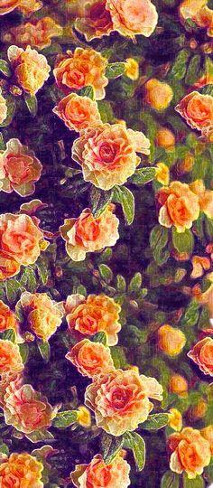 coquita ,roses