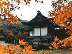 Colourful Autumn   #kyoto #japan #日本 #kyotojapan