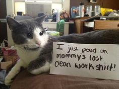 ❤ =^..^= ❤  Cat Shaming