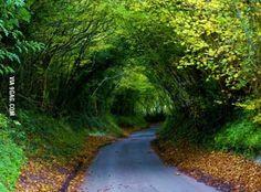 Pretty road to drive down.