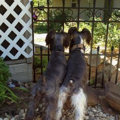A new fence to keep us from the squirrels?  Dang!