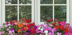 10 Best Flowers for Window Boxes in Shade - Garden Lovers Club Window Box Plants, Window Box Flowers, Window Planter Boxes, Flower Boxes, Best Flowers For Shade, Shade Flowers, Amazing Flowers, Blue Flowers, Bougainvillea