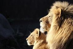 the King and the Queen of the jungle