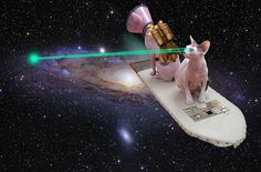 || Space cats shoot lasers