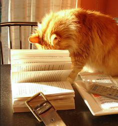cat reading by raider of gin, via Flickr