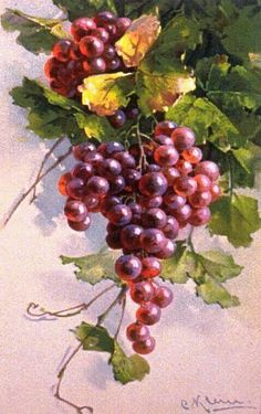 ideas for fruit painting watercolor catherine klein Grape Painting, Fruit Painting, China Painting, L'art Du Fruit, Fruit Art, Painting & Drawing, Watercolor Paintings, Catherine Klein, Watercolor Fruit