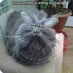 This humidity is killing me!