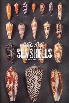 I have a strong affinity for collections & sea shells