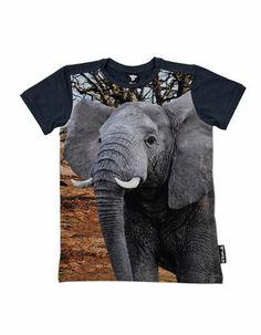 Dark grey T-shirt with elephant print - WILD